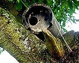 Schwegler Naturschutzprodukt Steinkauzröhre Steinkauz Röhre Nisthöhle Nistkasten Typ 20B mit Marderschutz und Belüftung