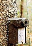 Naturschutzprodukt 2 Vogel Nistkästen Nisthöhle Vogelhöhle Typ 3SV Flugloch Durchmesser 34 mm mit Marderschutz aus Holzbeton Höhe 28 cm Satz 2 Stück
