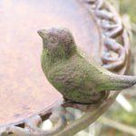 Vogeltränke: Was man beachten muss | Tipps & Tricks