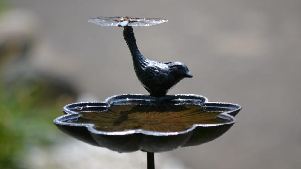 Vogeltränke mit Libelle
