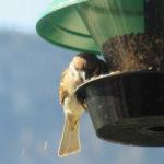 Futtersäule für Vögel – Richtig aufstellen, befüllen und reinigen: Was beachten?