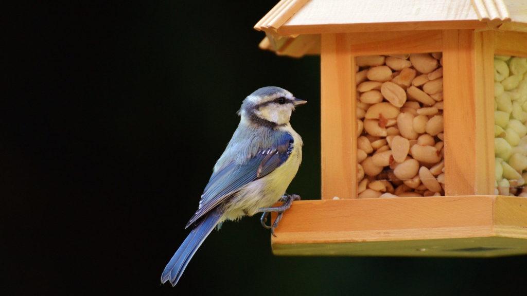 Futtersilo aus Holz mit Blaumeise