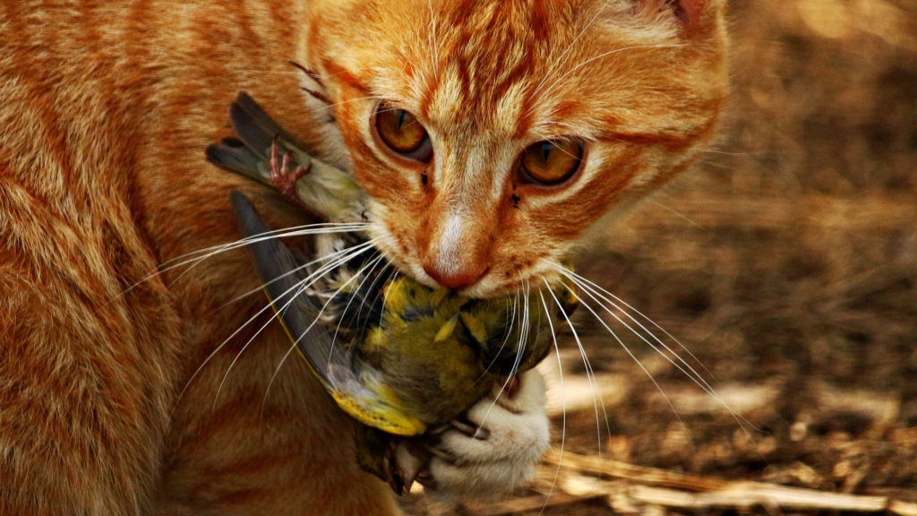 Katze mit gefangenem Vogel