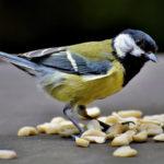 Erdnüsse als Vogelfutter: Top oder Flop? Was beachten?