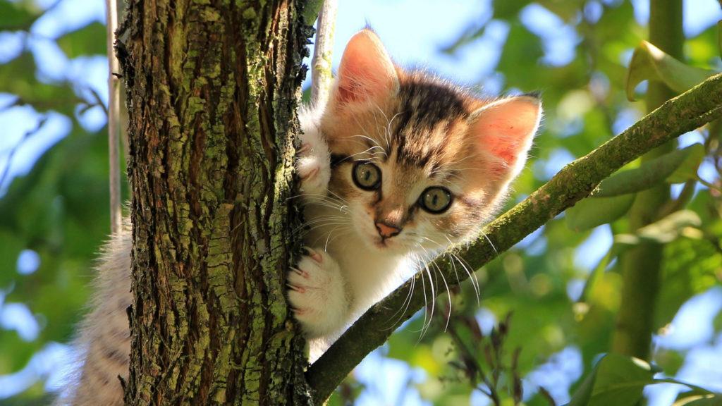 Babykatze sitzt im Baum.
