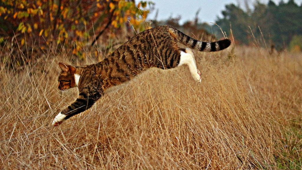 Katze springt in der Natur