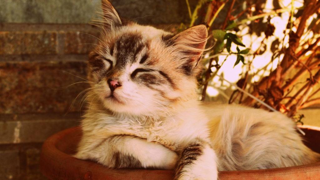 Katze liegt ganz entspannt im Korb.