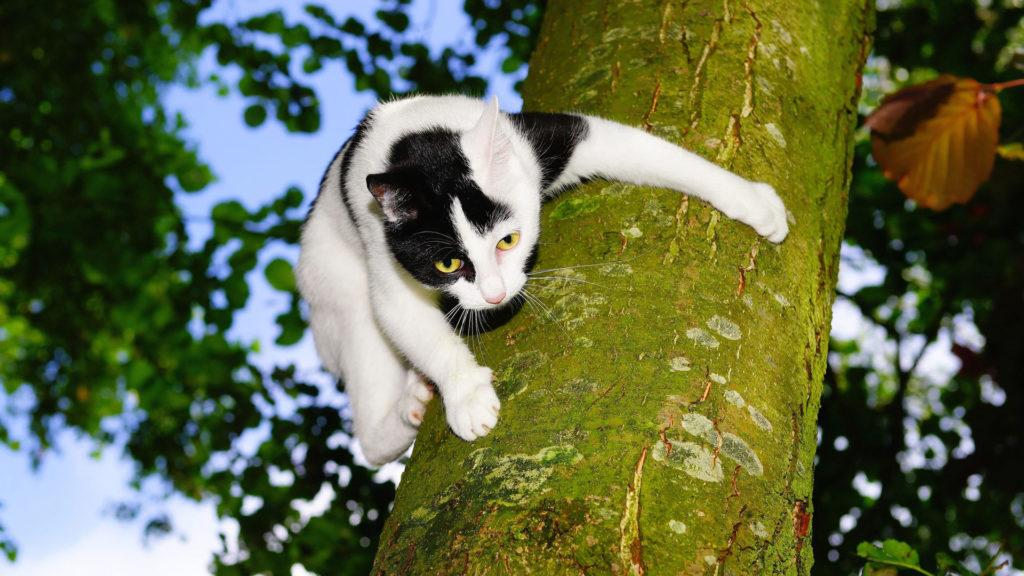 Katze klettert am Baumstamm.