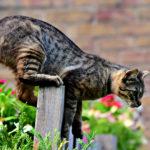Katzenschreck im Test: Mit Ultraschall gegen Katzen? | Katzenabwehr