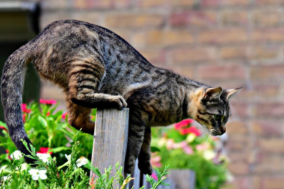 Ultraschall gegen Katzen im Garten Test