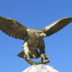 Adler-Attrappe zur Vogelabwehr | Im Praxistest: Wirksam oder nutzlos?