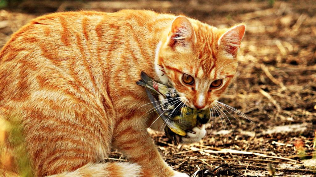 Katze mit Vogel im Maul.