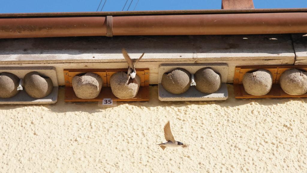 Nisthilfen für Schwalben unter Dachüberstand.