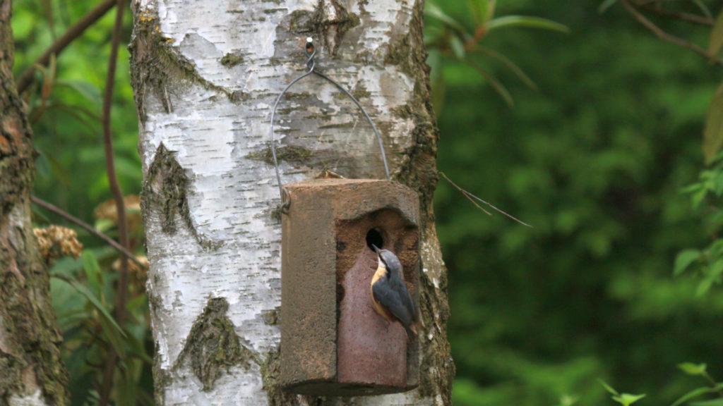 Holzbeton-Nistkasten an Baum genagelt.