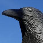 Raben-Krähen-Attrappe: Wirksamkeit im Test | Friedliche Vogelabwehr +++