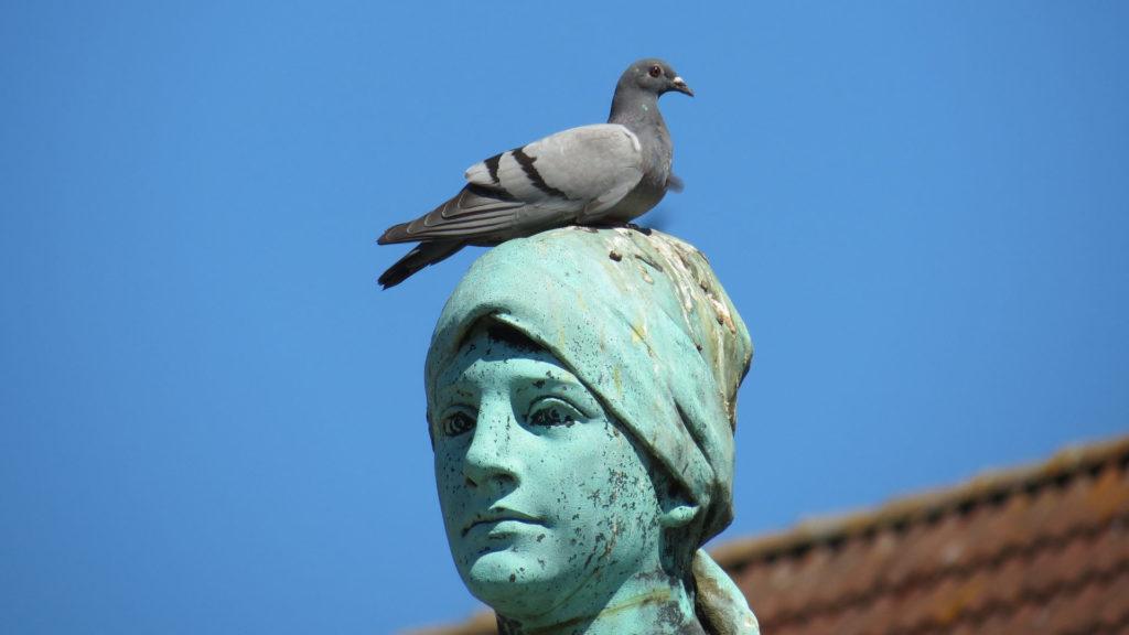 Taubenscheiße Taubenkot auf Statue