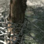 Kletterschutz im Test: Für Bäume, Zäune, Fallrohre | Katzenabwehrgürtel?